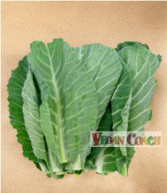 Collard greens leaves